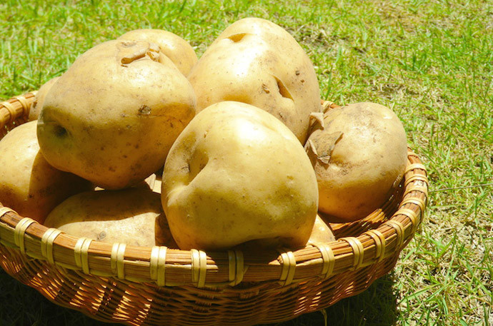 【時短テク】ジャガイモを長持ちさせる方法