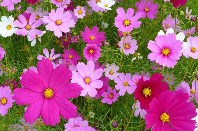 お米のとぎ汁再利用方法(6)花壇のお花や野菜にも