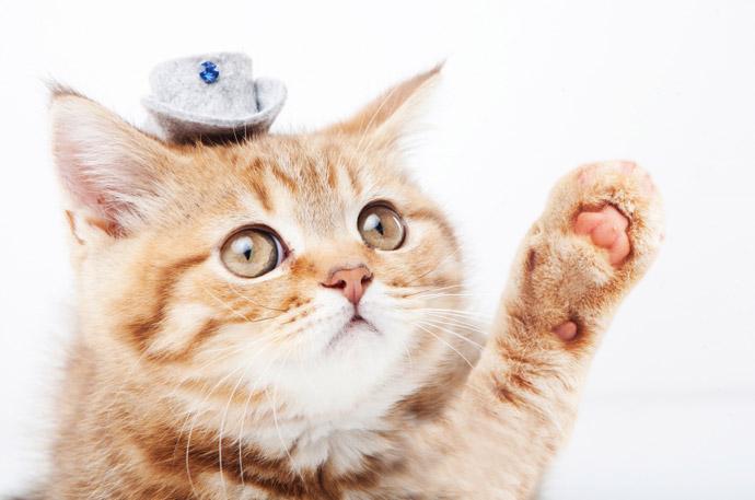 動物の血液型特集1.猫の血液型