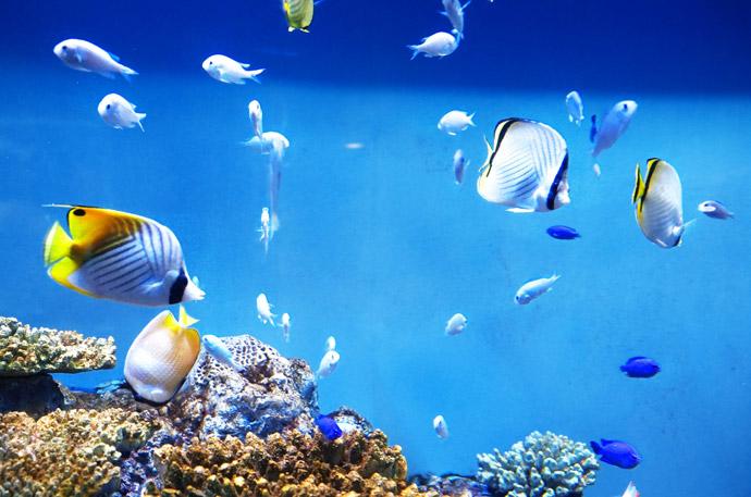 動物の血液型特集10.魚類の血液型