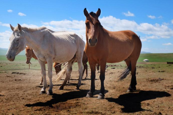 動物の血液型特集9.馬の血液型