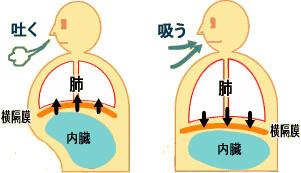 ノルアドレナリンが分泌される肉体的要因