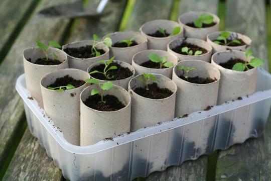 トイレットペーパーの芯で鉢植え