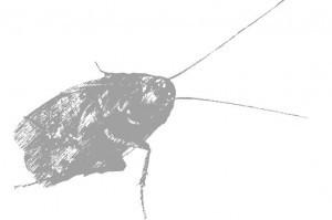 プロのゴキブリ駆除業者に学ぶ!ゴキブリが怖くなくなる雑学5つ