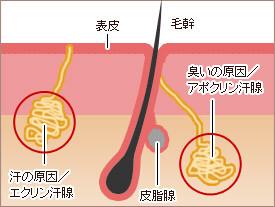 加齢臭が起こる原因は毛穴から出てくる『ノネナール』