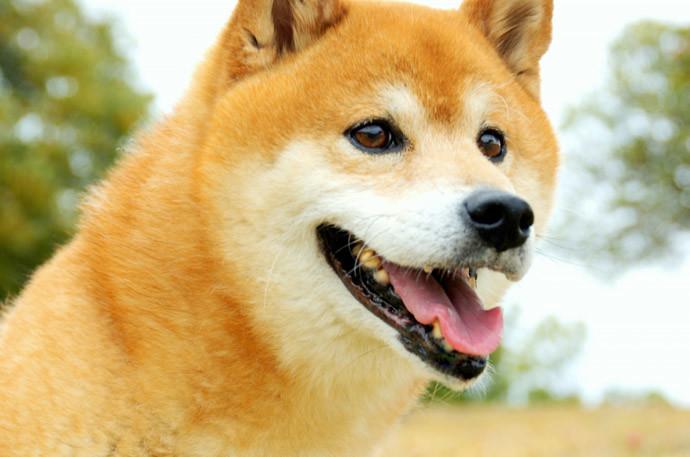 犬と仲良くするコツ~終わりに〜