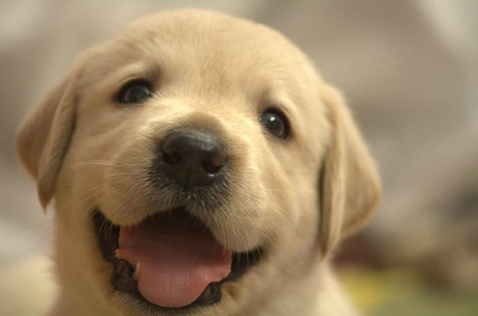 犬と仲良くする方法2.信頼は徐々に築き上げる
