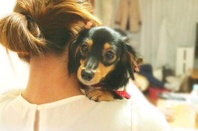 犬と仲良くする方法5.優しく抱っこする
