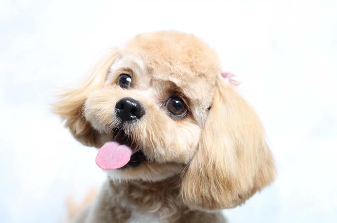 犬と仲良くする方法6.低い声よりも高い声が良い
