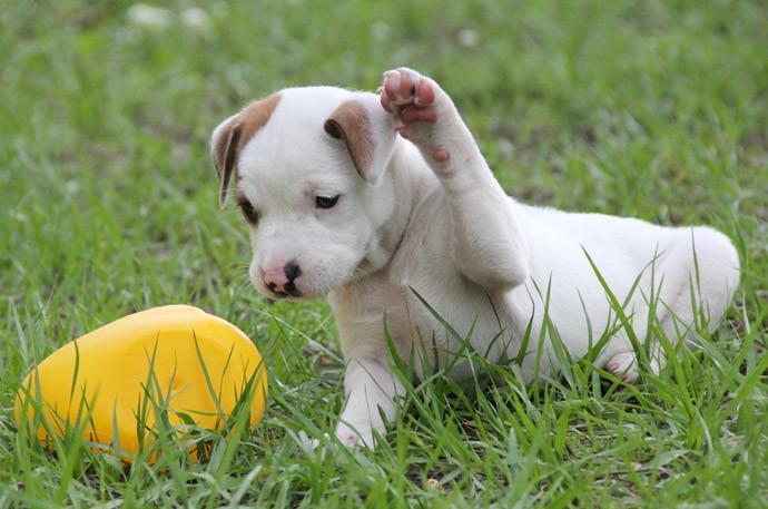 犬と仲良くする方法7.たくさん遊んであげる