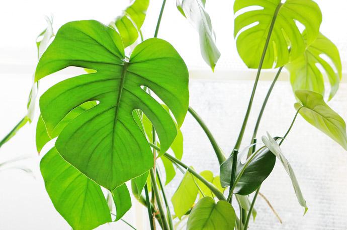 加湿器以外で部屋を乾燥から守る5つの方法3.観葉植物